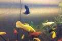 Отдам стаю красивых рыбок, улиток, растения, корм, Волосово