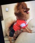Одежда для маленькой собаки собачий костюм