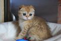 Драгоценный котик с малахитовыми глазами