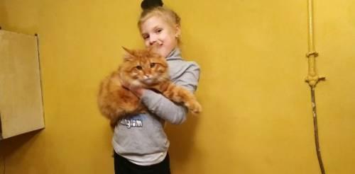 Котик ищет девочку