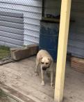 Собака в добрые руки, Красное Село