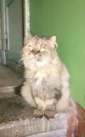 Персидская кошка ищет дом, Бугры