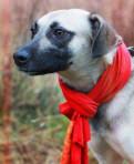 Маленькая собачка Хельга ищет дом, Щеглово