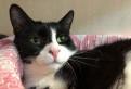Бэлла супер кошка в добрые руки