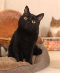 Нуар черный котик ищет дом