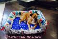 Лежанка диван для собак, Санкт-Петербург