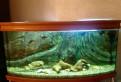 Панорамный аквариум 360л