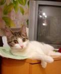 Котёнок, Кипень