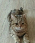 Кот, Павлово