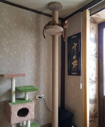Когтеточка для кошки в потолок