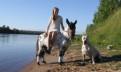 Чистокровная Аппалуза-пони, Нурма