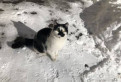 Котик-Медвежонок хочет домой