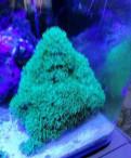 Кораллы, зонты