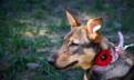 Собака 1, 5года ищет хозяев