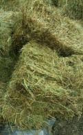 Свежее сено в кипах и рулонах от 6700