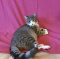 Ласковый котик в хорошие руки