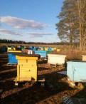 Пчелосемьи со своей пасеки продаю