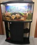 Аквариум на 180 литров, Санкт-Петербург