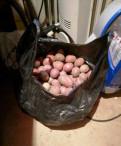 Картофель сменной