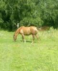 Лошадь, Первомайское