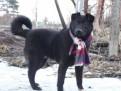 Разносторонне одаренный молодой пёс ищет друга