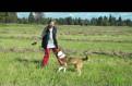 Молоденькая способная собака Эва в поисках счастья
