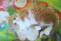 Котёнок в добрые руки, Советский