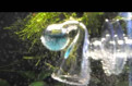 CO2 tester в аквариум