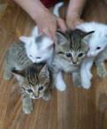 Умнющщие котята