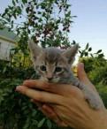 Котята, Сясьстрой