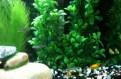 Нано аквариум Juwel Vio 40 LED (30 литров)