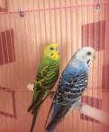 Продам волнистых попугаев, Токсово