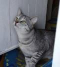Отдам даром красивого кота табби, Им Свердлова