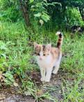 Котята в добрые руки, Сертолово