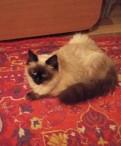 Кот Лис 10 месяцев