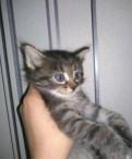 Отдаём котёнка