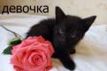 Отдаю котят в хорошие руки, Санкт-Петербург