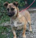 Ищет дом щенок мелкой собачки Айра