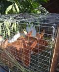 Кролики Калифорния и Новозеландский красный (нзк), Каменка