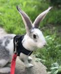 Кролик, девочка, Металлострой