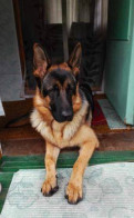 Собака 2 года