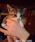 Котята даром, Павлово