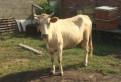 Корова, Первомайское