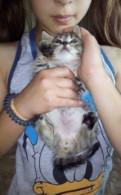 Отдам котят в добрые руки, Павловск