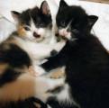 Чудо котята в добрые руки