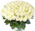 101 Роза белая Букет крупный, Санкт-Петербург