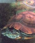 Компрессор зил 130 блок цилиндров, черепаха, Бугры