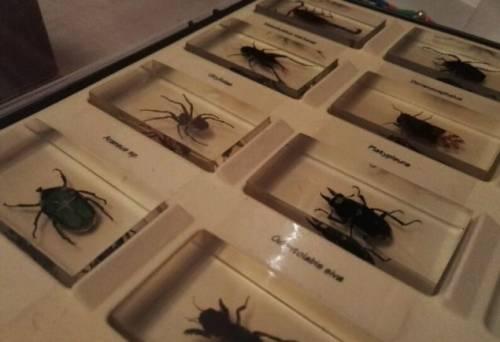 Коллекция жучков