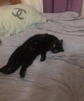 Кошка, Новое Девяткино