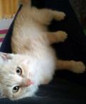 Котик, Тосно